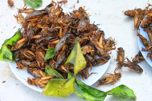 We Need More Cricket Farmers: The Price Of Our Growing Taste For Insects