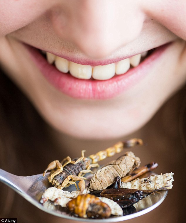 Edible Insects on the Menu