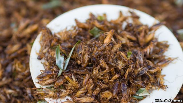 Bugs Found in Food, But for This Oregon Business It's OK