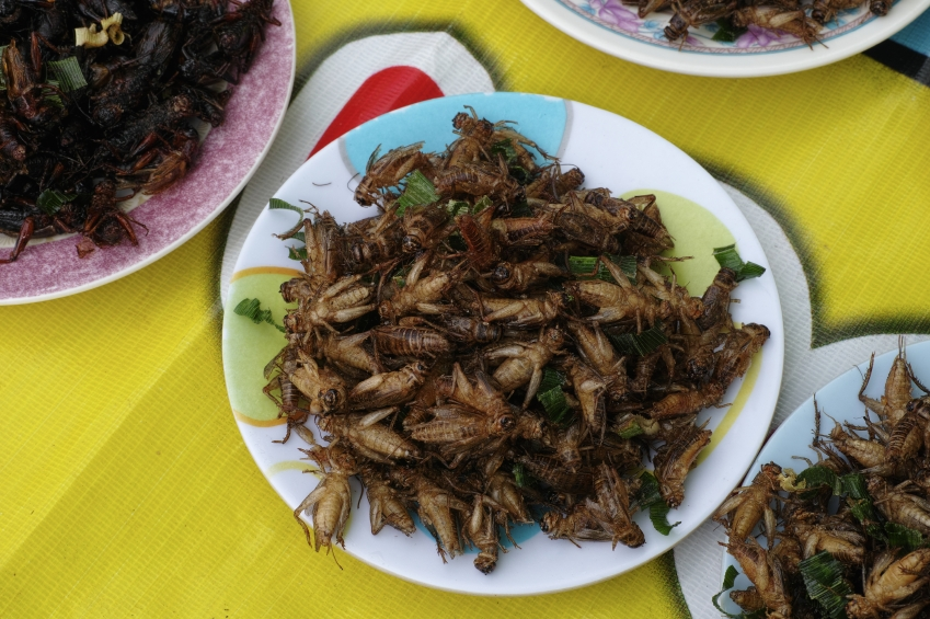 Eating Insects: Is This the Future Healthy Diet?