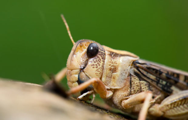Are Vegans Obligated to Eat Insects?