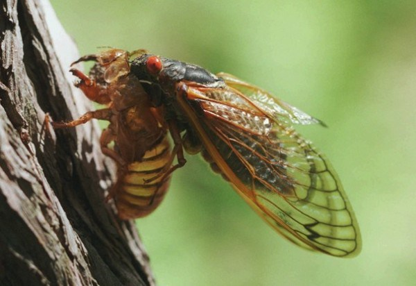 UN wants you to eat more bugs