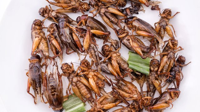 Bugging out: Is cricket flour on your menu?