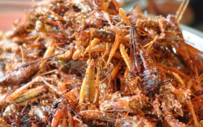 The Underground World of Eating Bugs