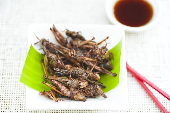 15 insects you can eat