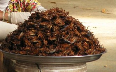 Eating insects: Vegans and vegetarians weigh in