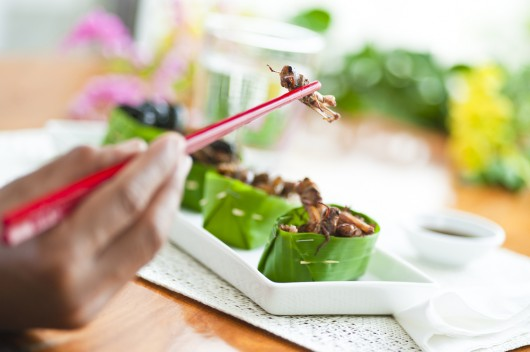 The buzz about entomophagy: Is eating insects more than a novelty?
