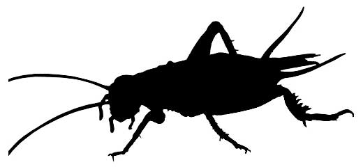 Insects, food of the future?