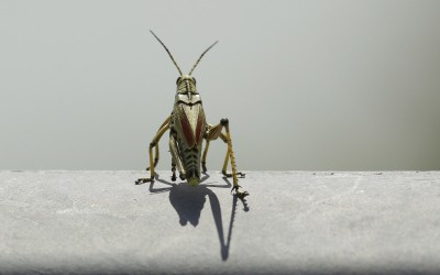 This Israeli start-up is breeding grasshoppers to fight famine