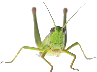 Why we should eat crickets instead of cows