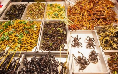 Five Ways to Start Eating Insects